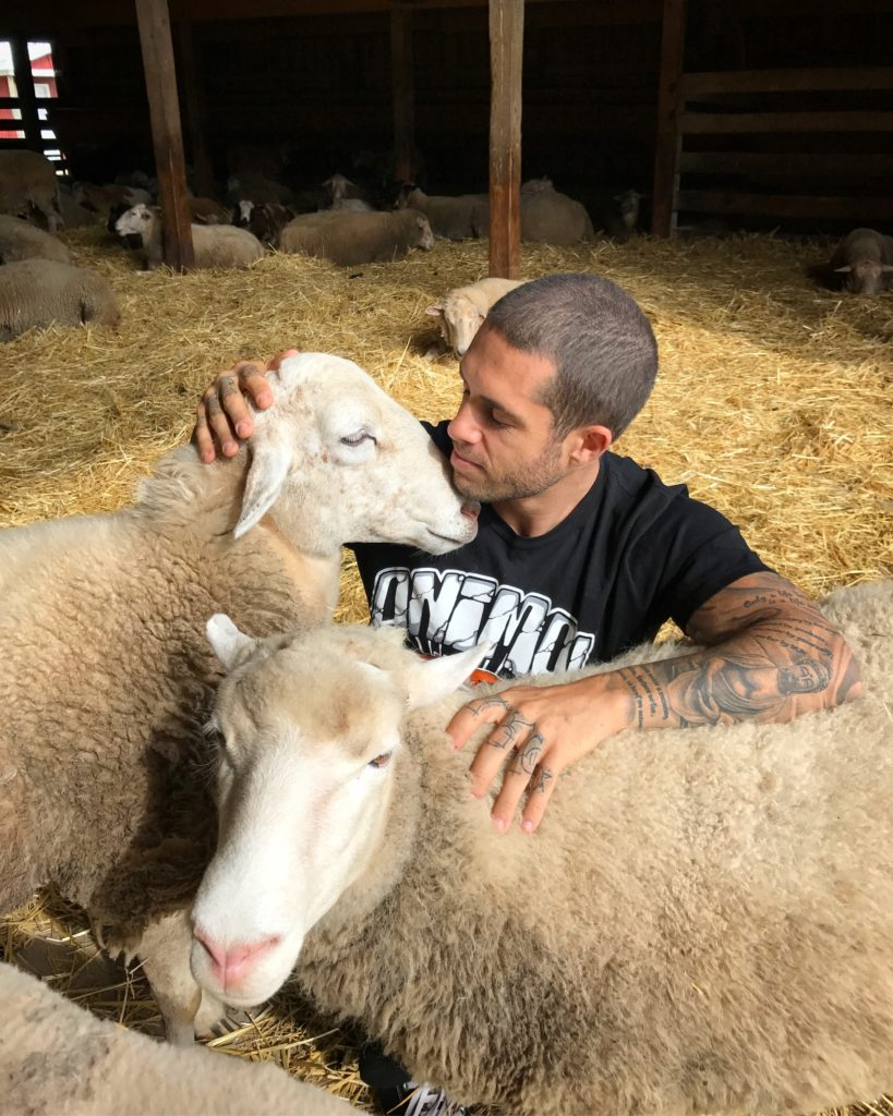 James with sheep